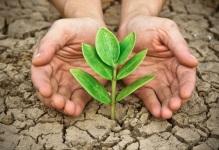 brotando planta de tierra seca Tierra Santa