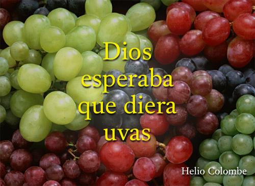 Dios esperaba que diera uvas - Isaías cap. 5